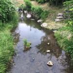 あまりにも暑いので夏を先取りして見山の里で川遊び!残念ながら魚はゲットならず!