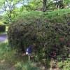 自然たっぷりの吹田千里北公園で遊んできたよ!たまには鉄棒でさかあがりの練習もしなきゃね!