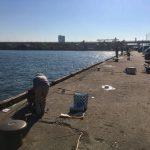 車を横付けできる泉大津の汐見でサビキ釣り!